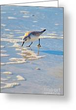 Small Sandpiper Looking For Dinner Greeting Card