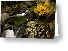 Small Stream During Fall Greeting Card