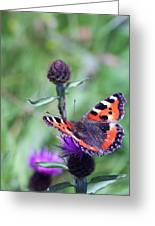 Small Tortoiseshell Greeting Card