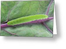 Small White Butterfly Caterpillar Greeting Card