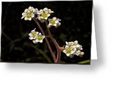 Small White Flowers Greeting Card