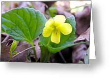 Small Yellow Violet Greeting Card