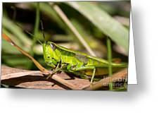Smaragd-green Grasshopper Greeting Card