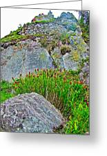 Smartweed Just Below Huayna Picchu's Peak-peru  Greeting Card