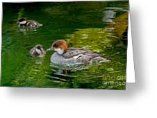 Smew With Ducklings Greeting Card
