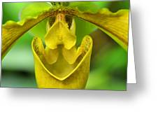 Smile - Orchid Art Photograph By Sharon Cummings Greeting Card