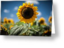 Smile Sunflower Greeting Card by Jason Bartimus
