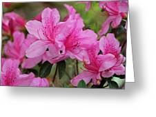 Smiling Azalea  Greeting Card