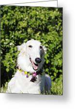 Smiling Borzoi Dog Greeting Card by Christian Lagereek
