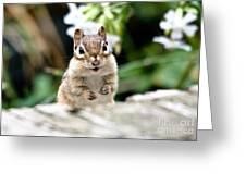 Smiling Chipmunk Greeting Card