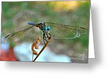 Smiling Dragon Fly Greeting Card