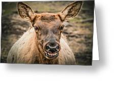 Smiling Elk Greeting Card