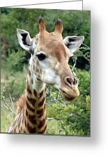 Smiling Giraffe Greeting Card