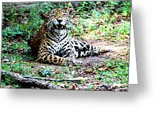 Smiling Jaguar Greeting Card