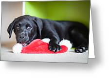 Smiling Lab Puppy Greeting Card