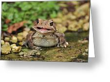 Happy Toad Greeting Card
