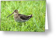 Smiling Snipe Greeting Card