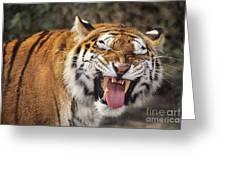 Smiling Tiger Endangered Species Wildlife Rescue Greeting Card
