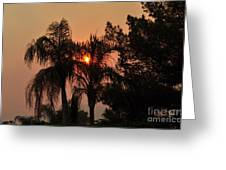 Smoke Covered Sky Sunset Thru The Palm Trees Greeting Card