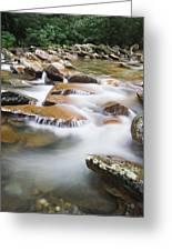 Smokey Mountain Creek Greeting Card