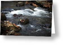 Smokey Mountain Stream In Autumn No.2 Greeting Card