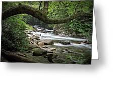 Smokey Mountain Stream. No 547 Greeting Card