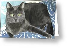 Smokey On A Blue Blanket Greeting Card