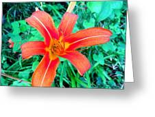Smokie Mountian Wild Flower Greeting Card