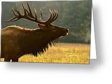 Smoky Mountain Bugle Greeting Card