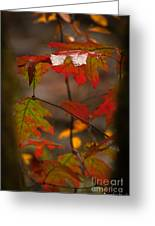 Smoky Mountain Color II Greeting Card