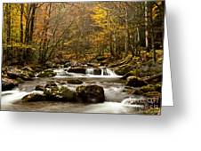 Smoky Mountain Gold II Greeting Card