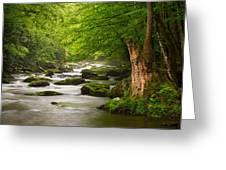 Smoky Mountains Solitude - Great Smoky Mountains National Park Greeting Card