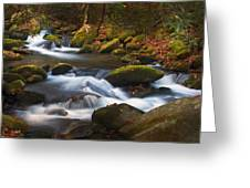 Smoky Mtn Autumn Stream Greeting Card