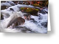 Smoky Mtn Stream - 429 Greeting Card