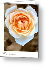 Smooth Angel Rose Greeting Card