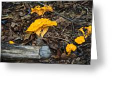 Smooth Chanterelle Greeting Card