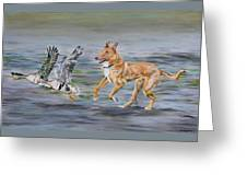 Smooth Collie Trying To Herd Geese Greeting Card