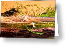 Smooth Or Common Newt  Greeting Card