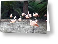 Smudgestick Flamingos Greeting Card