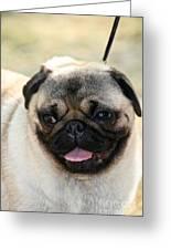 Smug Pug Greeting Card