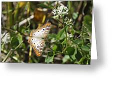 Snack For A White Peacock Butterfly Greeting Card