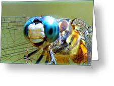 Snack Time Dragonfly Greeting Card