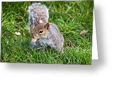 Snack Time For Squirrels Greeting Card