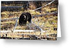 Snacking Bruin Greeting Card