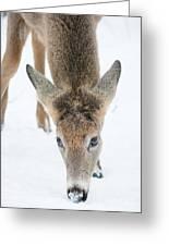 Snacking Deer Greeting Card