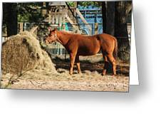 Snacking On Some Hay Greeting Card