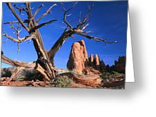 Snag At  Fiery Furnace Labyrinth Arches Greeting Card