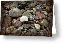 Snail Among The Rocks Greeting Card