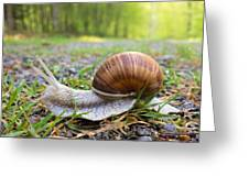 Snail Creeping Over A Forest Path Greeting Card