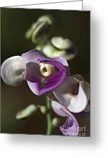 Snail Flower In The Spot Light Greeting Card